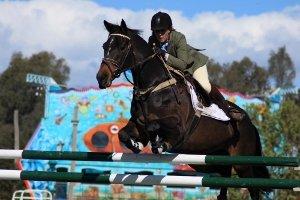image horsejumpingimg_1049-jpg