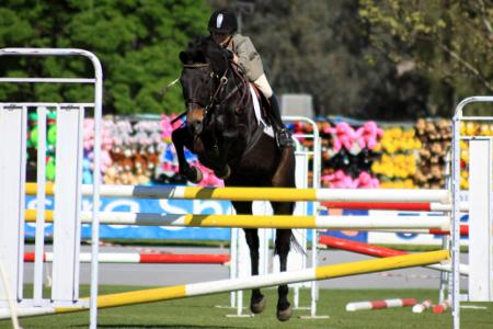 horse jumping wangaratta show